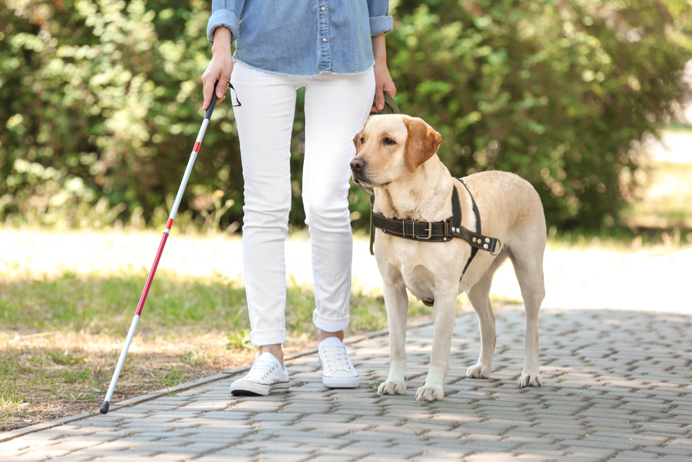 What Is an Assistance Dog?