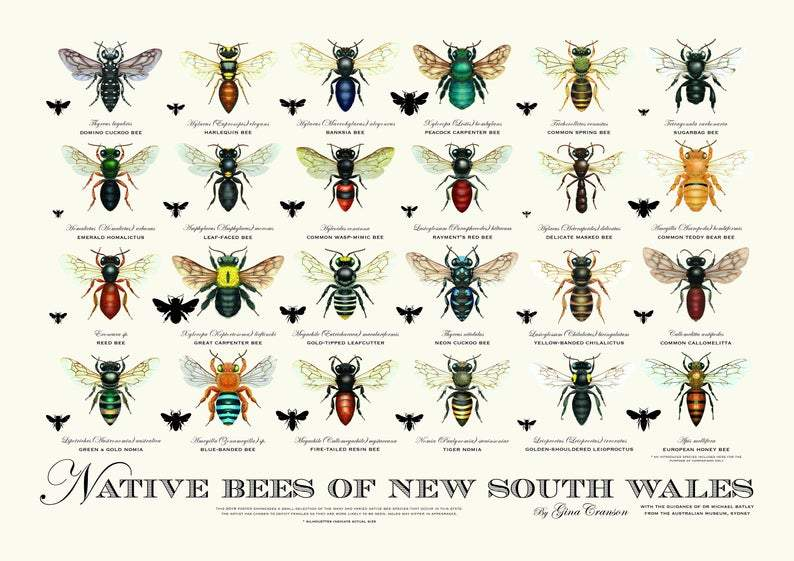 Native Bee Posters