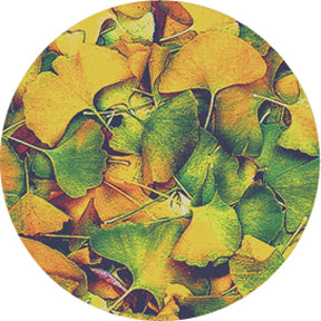 Rosco Ginko Color Glass Gobo