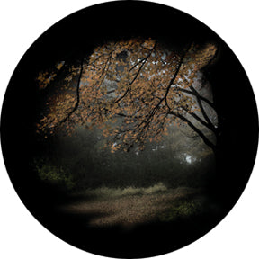 Rosco Autumn Glade Color Glass Gobo