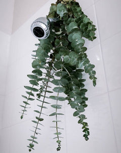 Eucalyptus Shower Bouquet