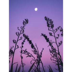 LAVENDER MOON (SIGNATURE COLLECTION)