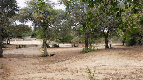 Usually packed campsites now stand eerily empty. Image: Into the Kruger