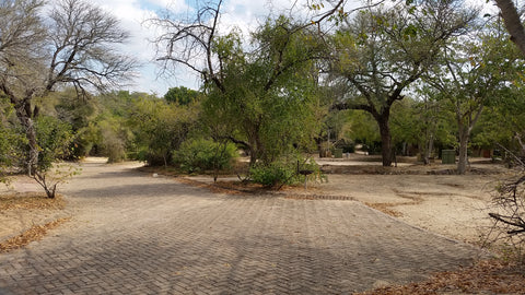 Campsites at Kruger National Park are uncharacteristically empty. Image: Into the Kruger