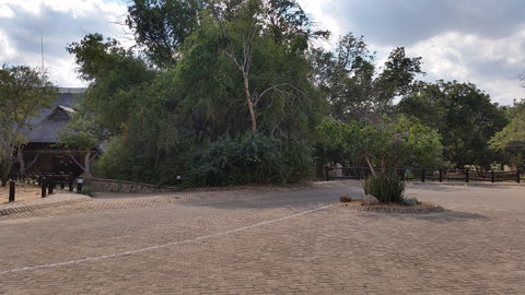 An empty car park at Skukuza Rest Camp, Kruger National Park. Image: Into the Kruger