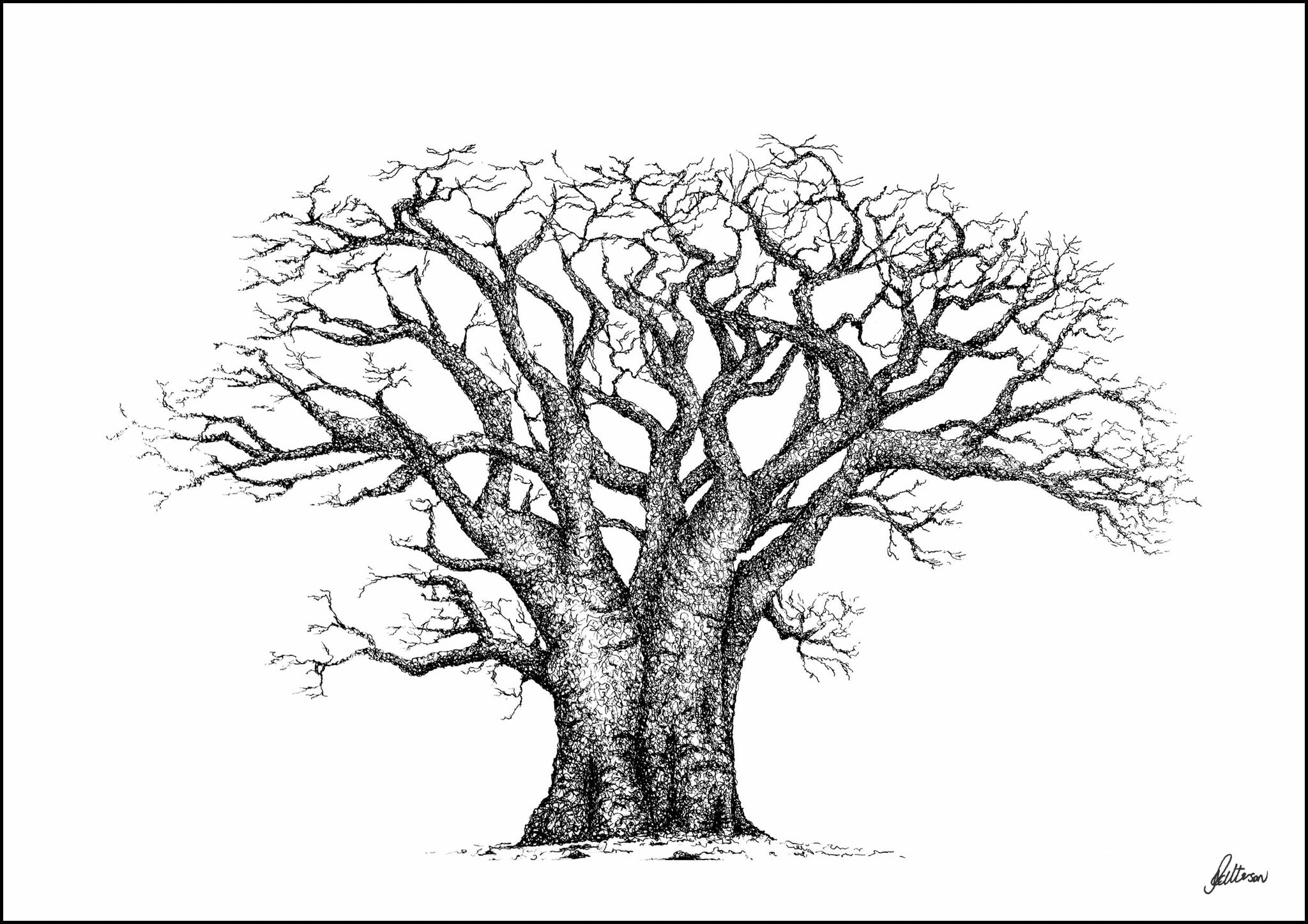 Baobab Tree Limited Edition Print