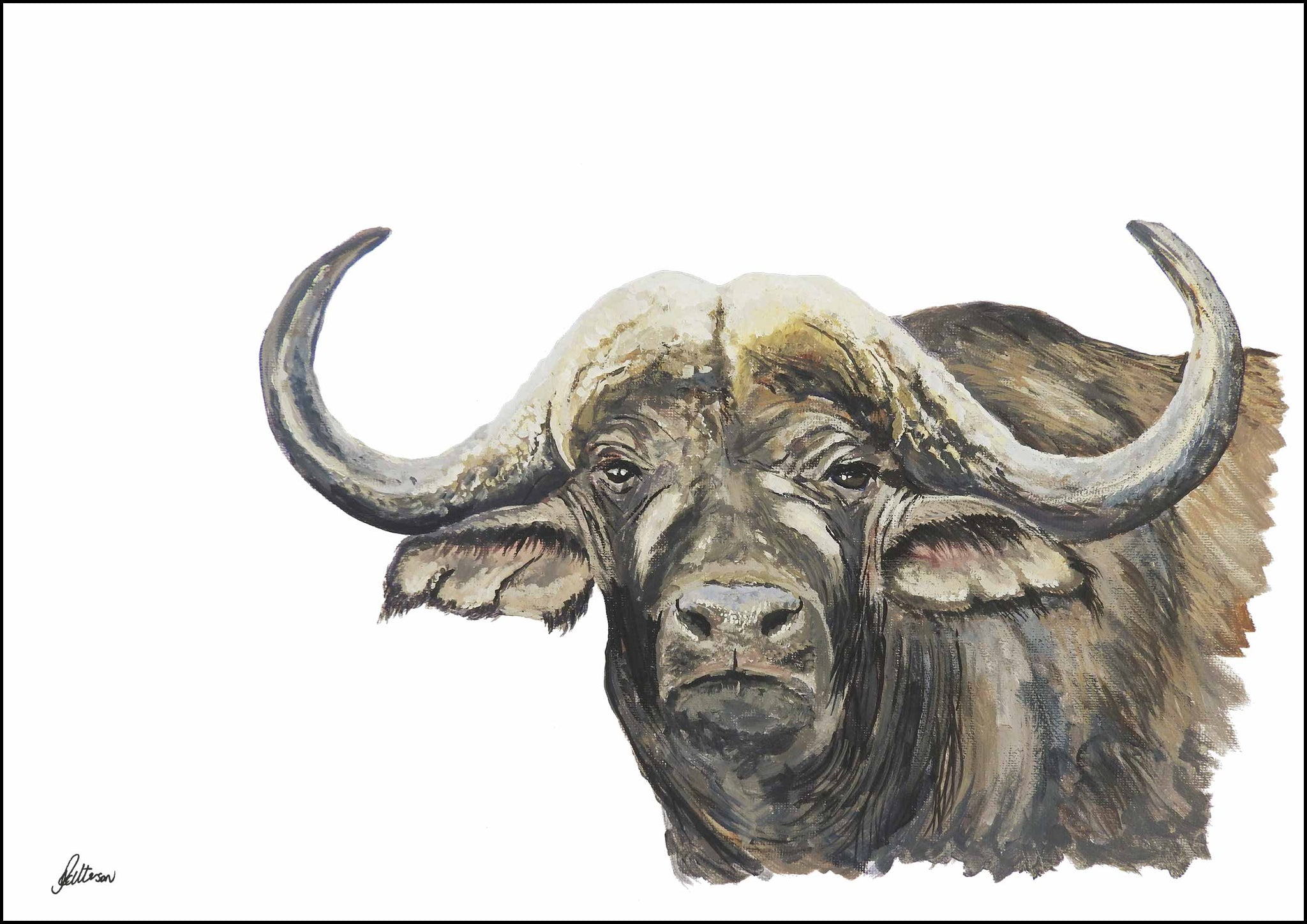 Limited Edition Print Wildlife in colour - African Buffalo