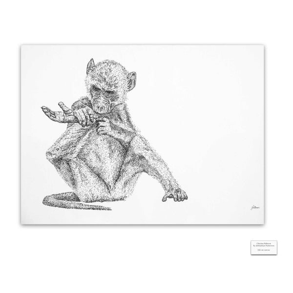 Original Artwork - J Patterson - Chacma Baboon