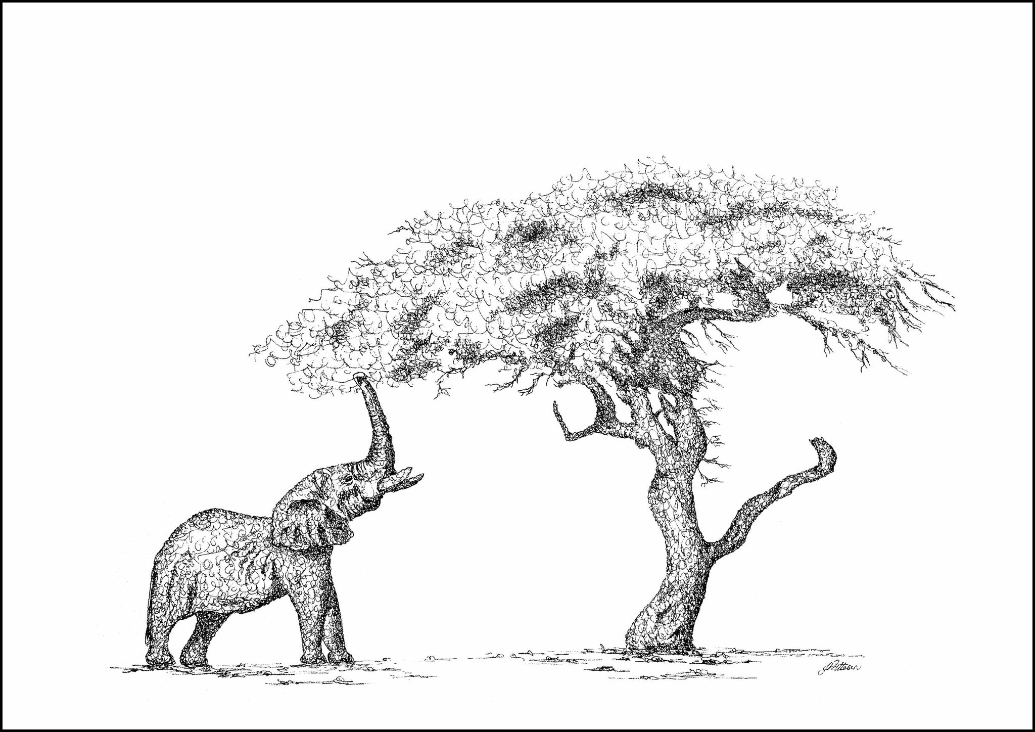 African Elephant and a Acacia Tree Limited Edition Print