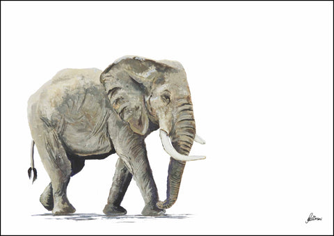 Limited Edition Print Wildlife in colour - Elephant