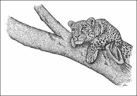Leopard in Tree Limited Edition Print