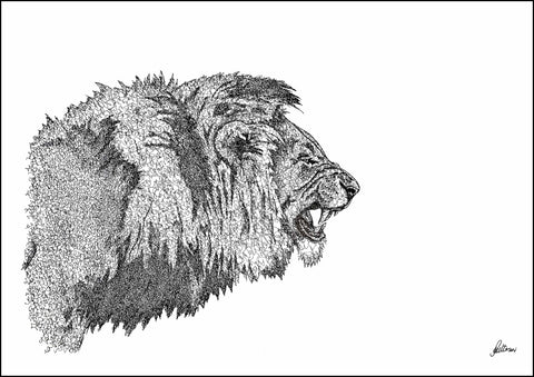 African Lion Limited Edition Print