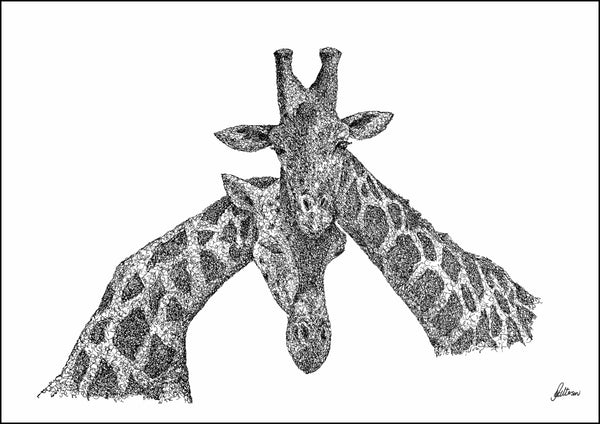 Giraffes Necking Limited Edition Print