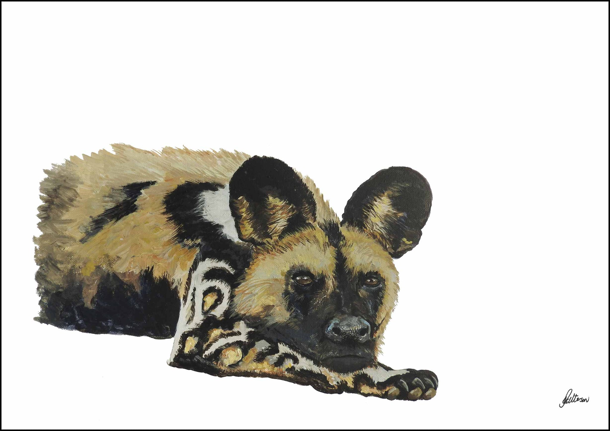 Limited Edition Print Wildlife in colour - African Wild Dog - Waiting game