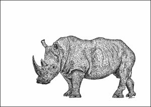 White Rhino Limited Edition Print