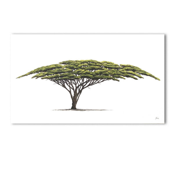 Original Artwork - J Patterson - Acacia Tree