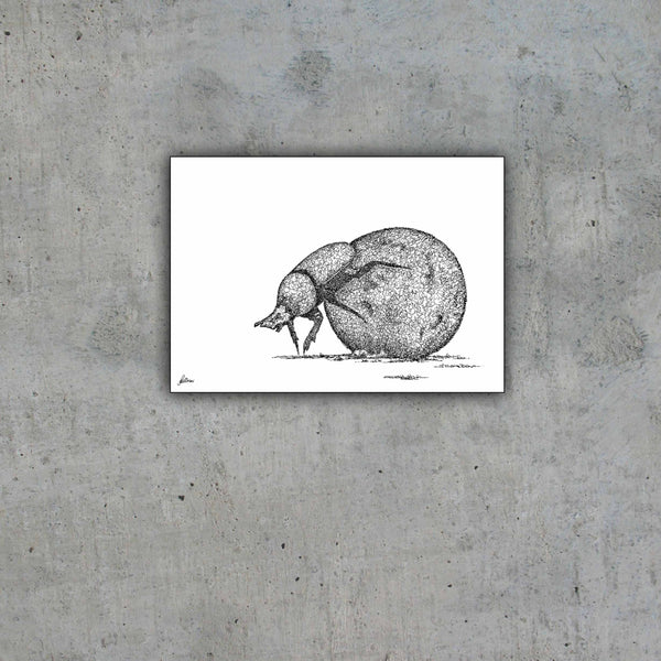 Dung Beetle Limited Edition Print