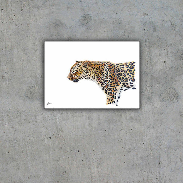 Limited Edition Print Wildlife in colour - Leopard