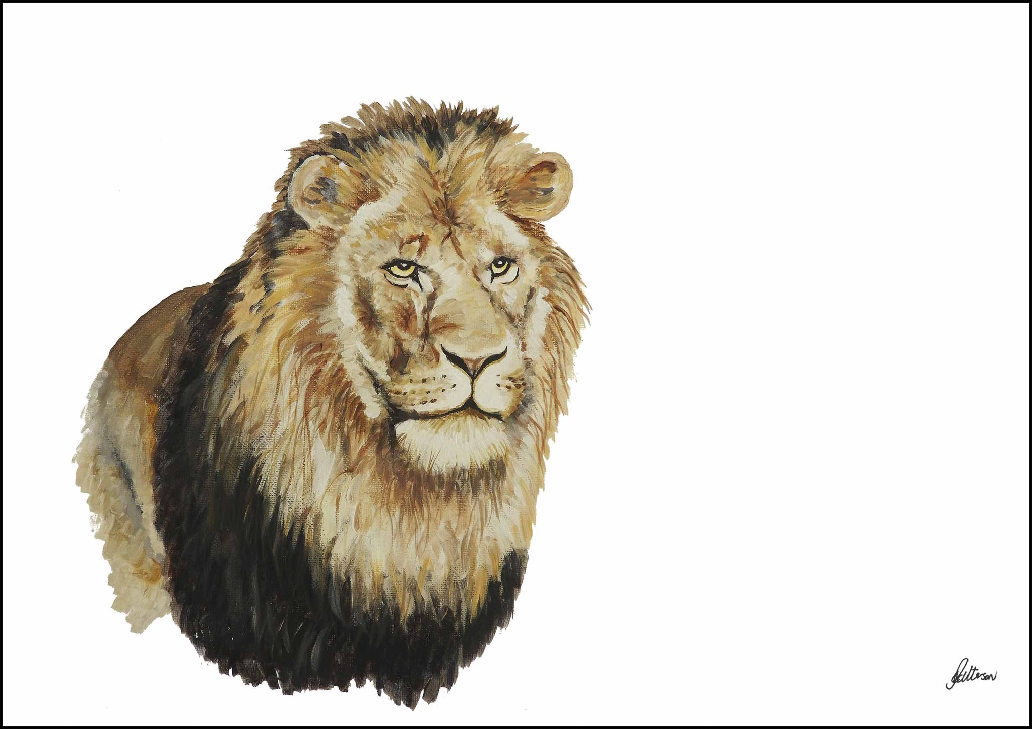 Limited Edition Print Wildlife in colour - Lion