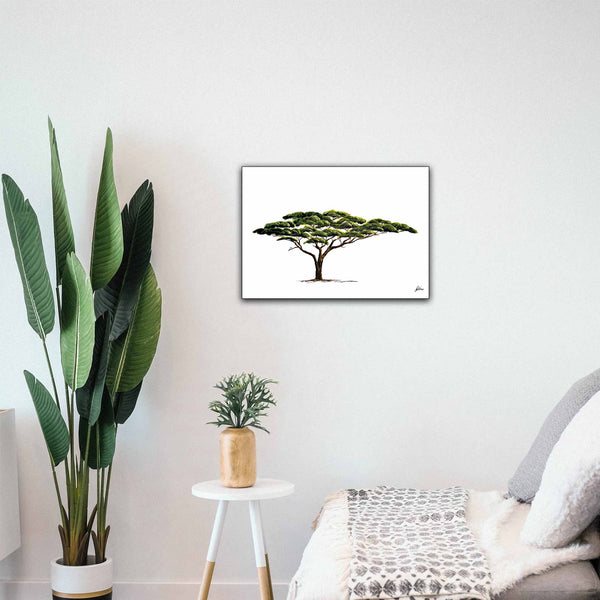 Limited Edition Print Wildlife in colour - Acacia Tree