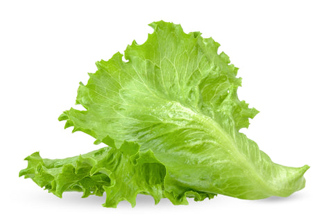 Fresh Green Leaf Lettuce (Each) (LETLP)