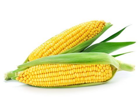 Fresh Corn (Piece) (CORP)