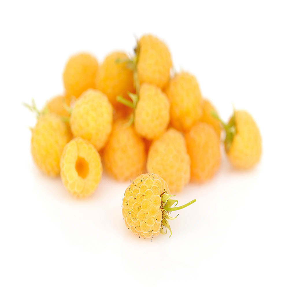 Fresh yellow anne raspberry