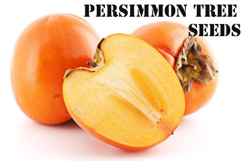 DATE PLUM PERSIMMONS TREE SEEDS