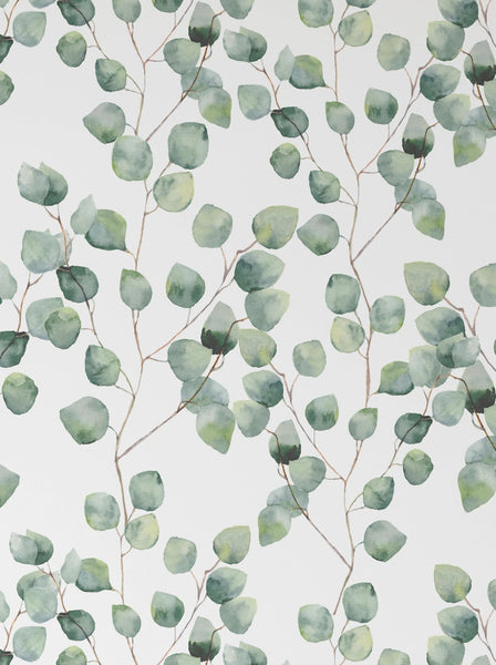 Watercolor Floral - Eucalyptus