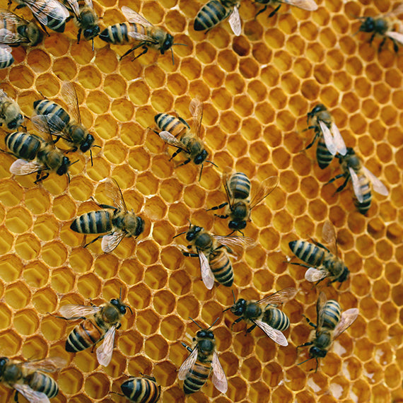 beehive nucleus (nuc) from Ames Farm