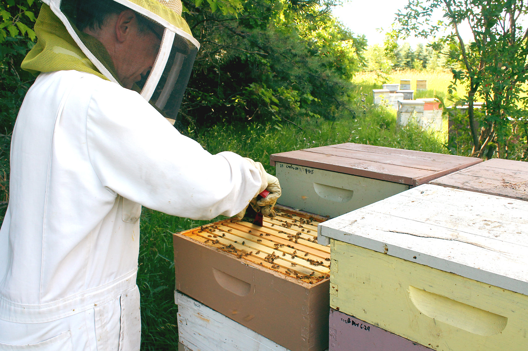 Ames Farm Honey Beekeeper on Duty