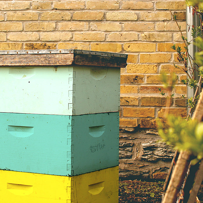 rental beehives from Ames Farm
