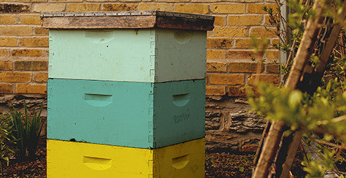 Honeybees for Sale, Nucs for Sale, Beehives for Sale ...