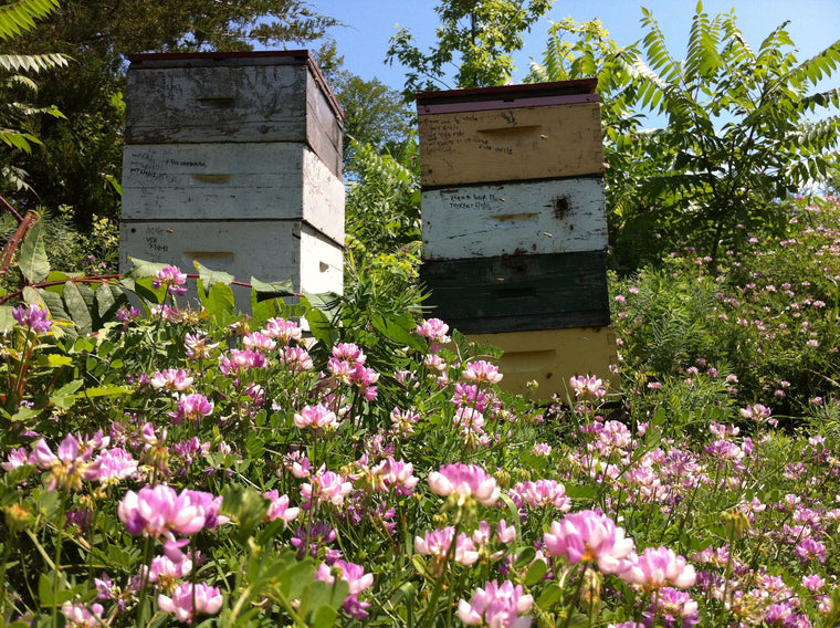 Bee Hive & Beekeeper Rentals -  Corporate & Rooftops