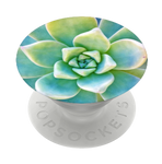 Now that's succulent, PopSockets