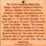 #P006 Black Bear, New Mexico State Animal