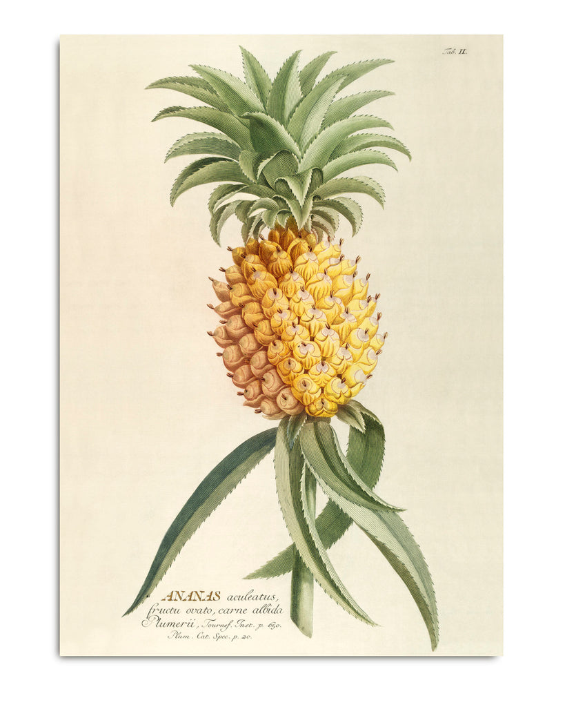 Affiche Ananas 30x40 - The Dybdahl Co. - Coeur Grenadine