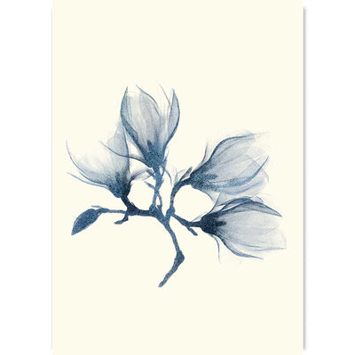 Blue Magnolia botanical floral art print by Claude & Leighton