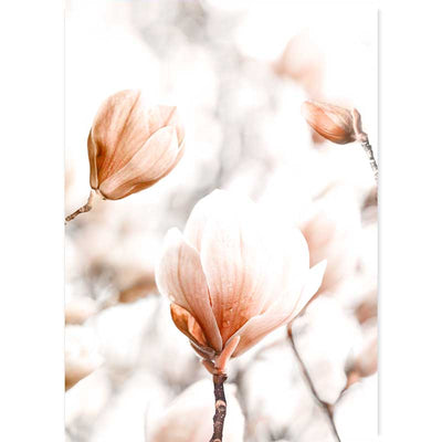 Dreamy Magnolia Flowers botanical photography art print by Claude & Leighton