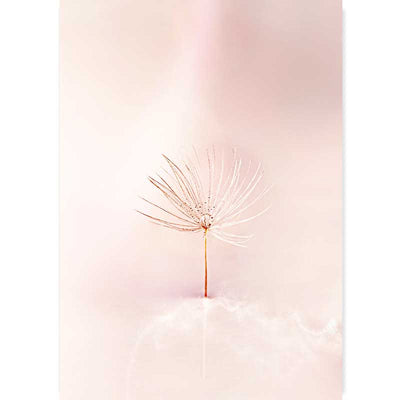 Dandelion Clock Photography Art Print at Claude & Leighton