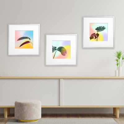 Set of 3 Pastel Leaves botanical art prints by Claude & Leighton - monstera, rubber plant & bird of paradise leaves wall art