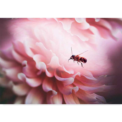 The Bee and the Pink Flower photography art print at Claude & Leighton