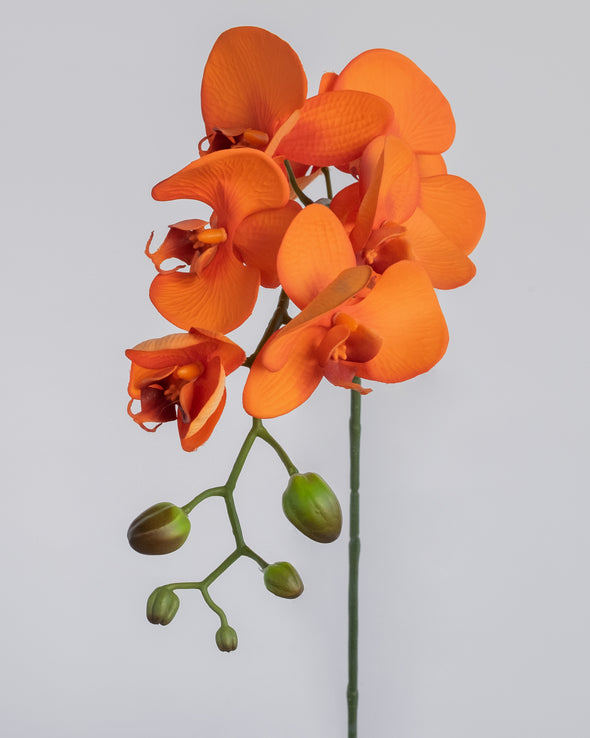 PHALAENOPSIS SPRAY ORANGE