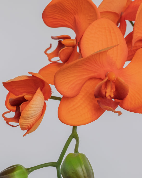 PHALAENOPSIS SPRAY ORANGE 70CM - 5293OR