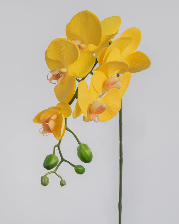 PHALAENOPSIS SPRAY YELLOW