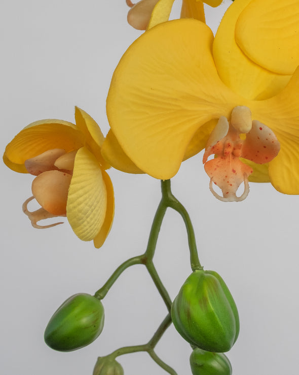PHALAENOPSIS SPRAY YELLOW 70CM - 5293YE