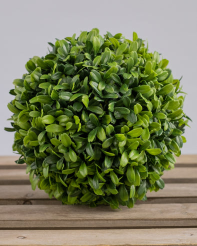 BOXWOOD BALL 17CCM UV PROTECTED