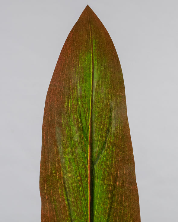 CORDYLINE LEAF RED/GREEN 87CM - 6032