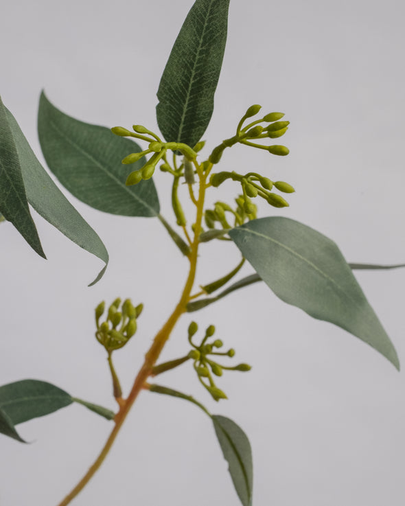 EUCALYPTUS SPRAY WITH SEED 60CM - 6222