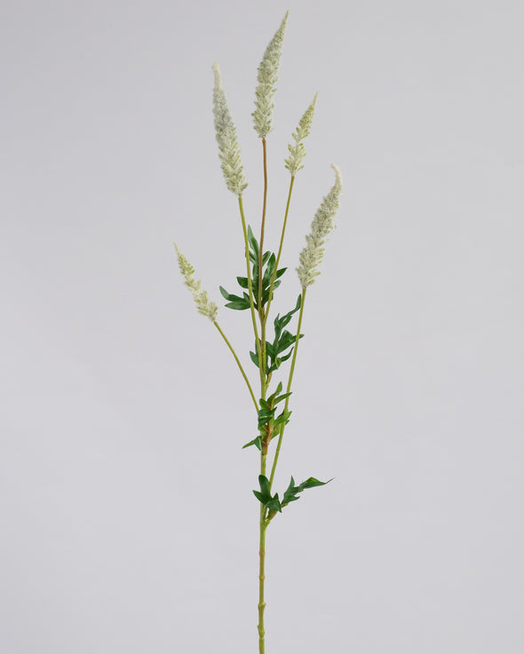 ASTILBE SPRAY CREAM 81CM